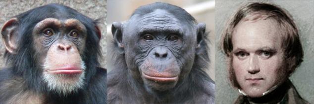 Chimp_bonobo_Darwin